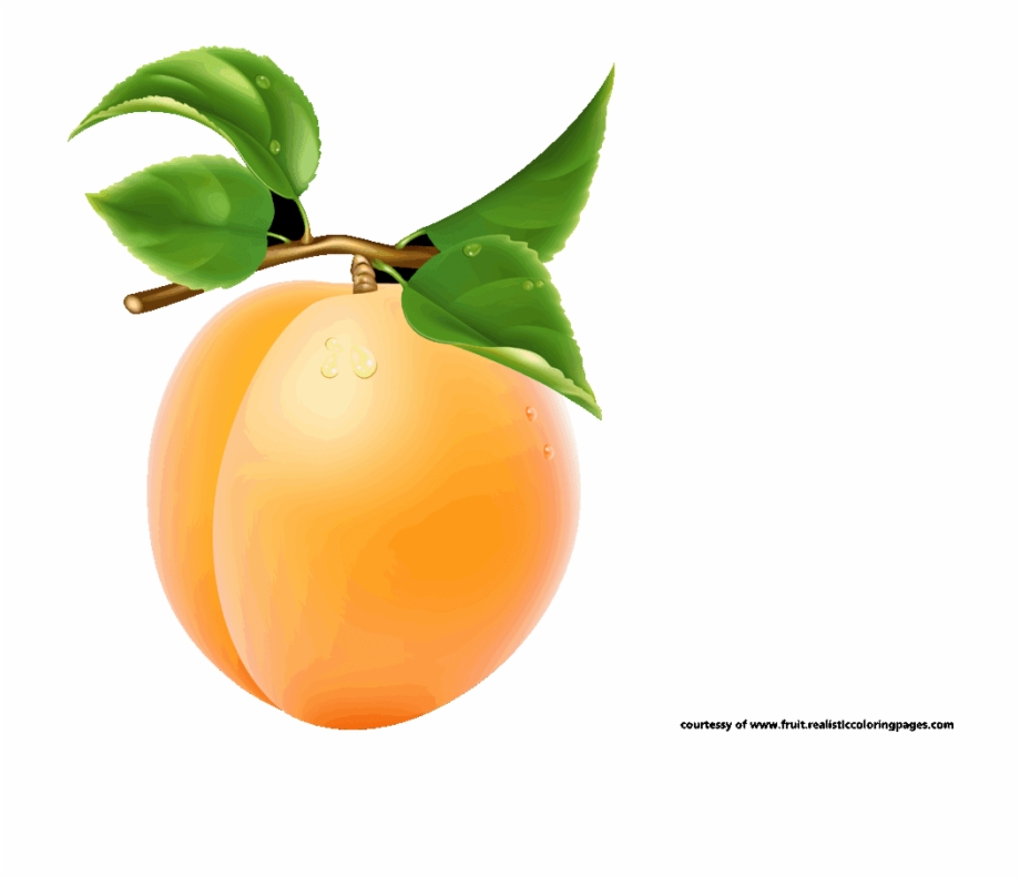 Fruit clipart single. Apricot transparent image