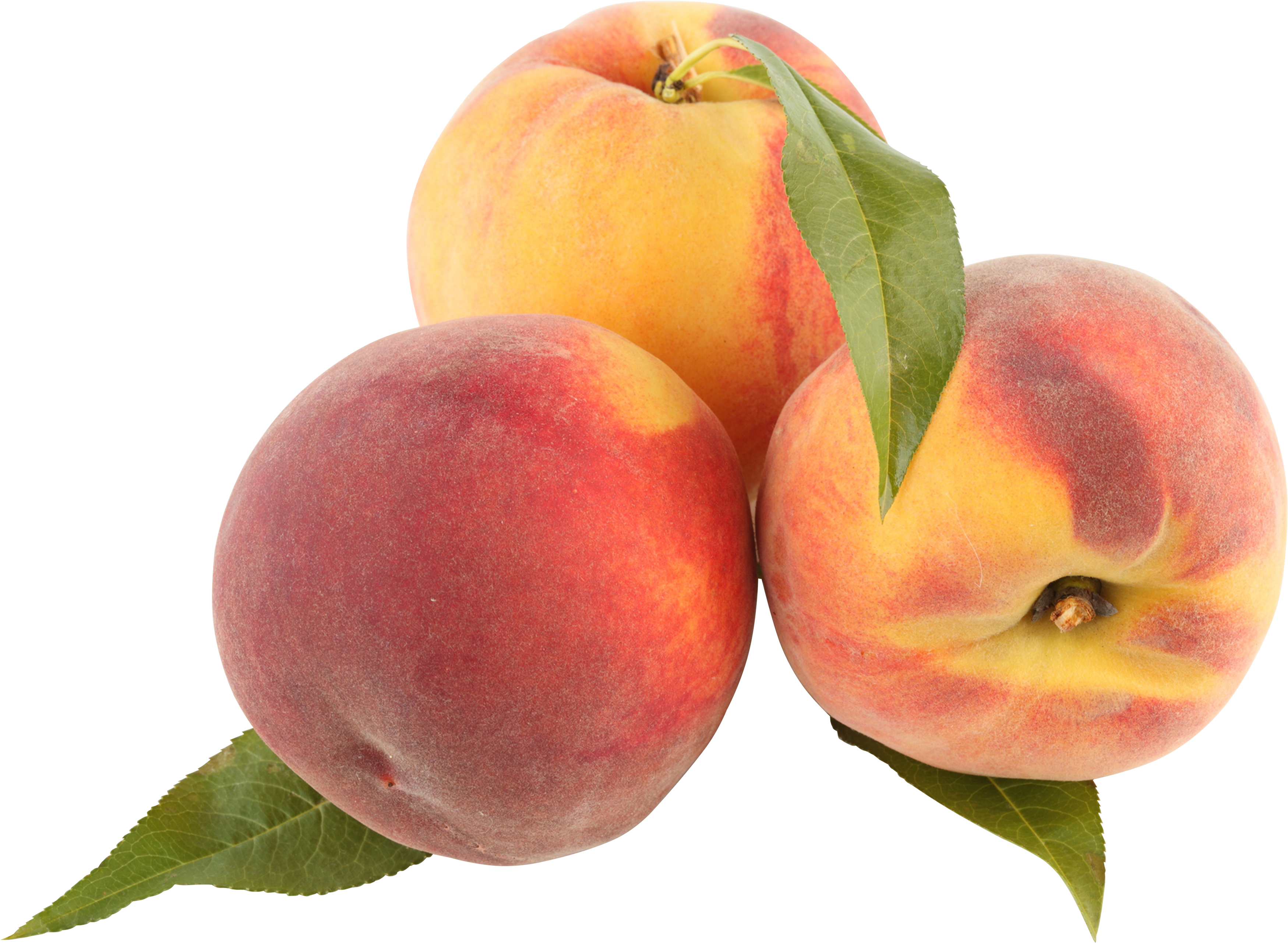 Peaches transparent png pictures. Fruits clipart spring
