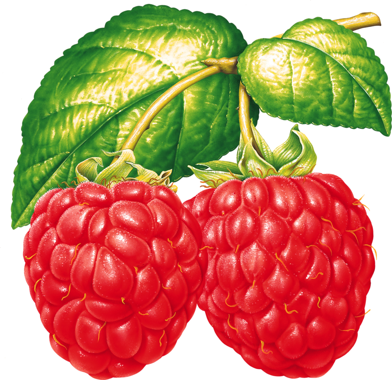Fruit clipart tropical fruit.  png pinterest clip