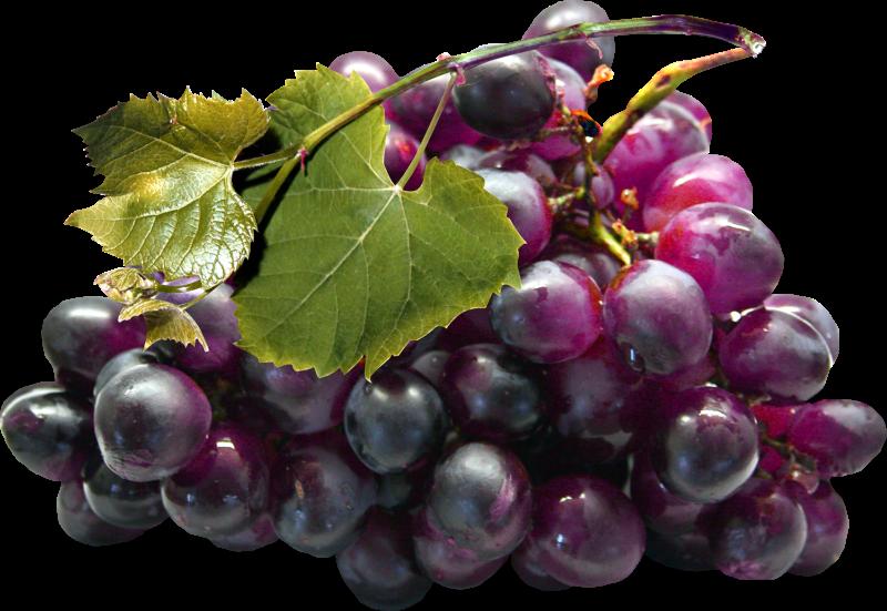 Grape clipart plum fruit.  clip art pinterest