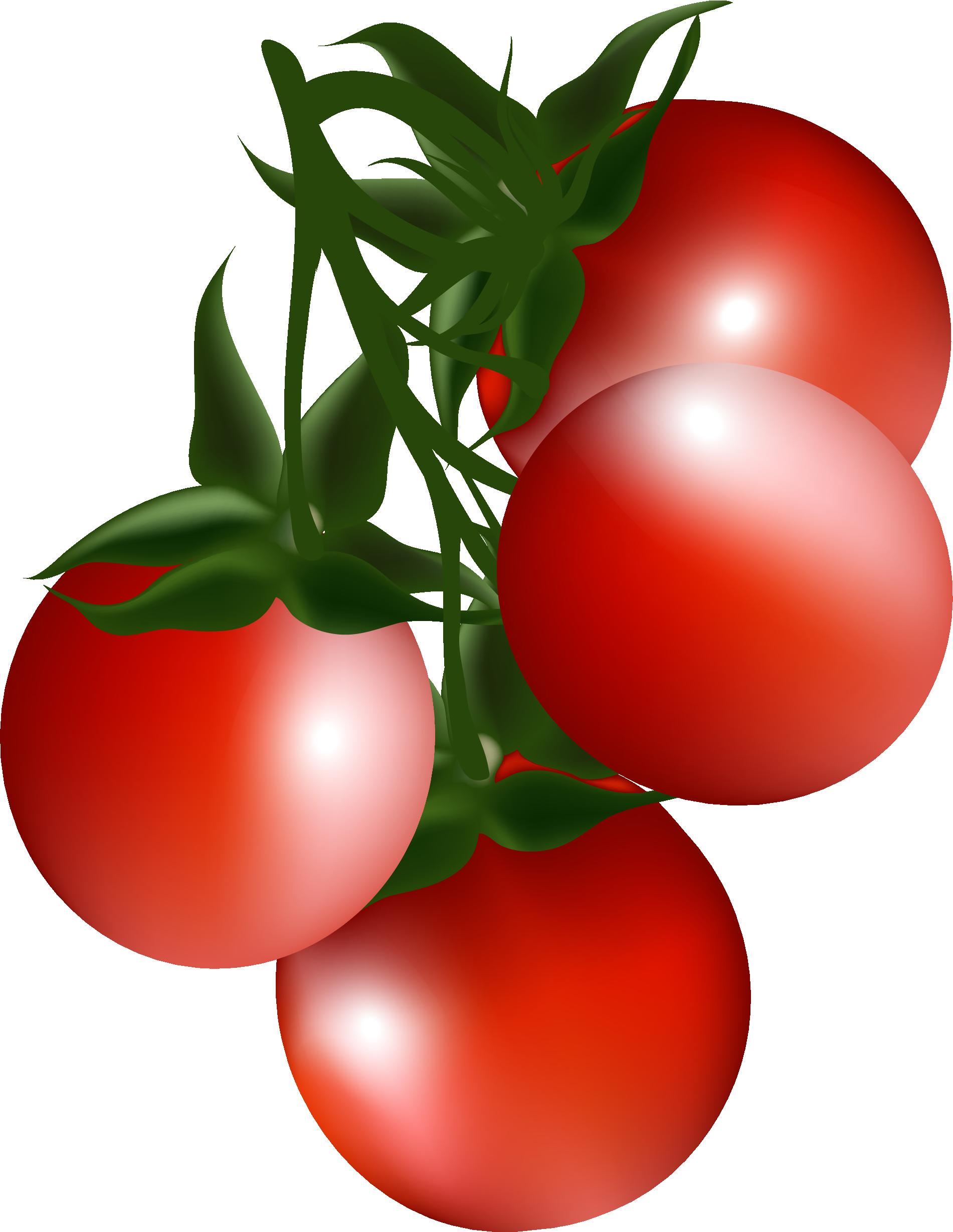 Strawberries clipart bush. Cherry tomato clip art