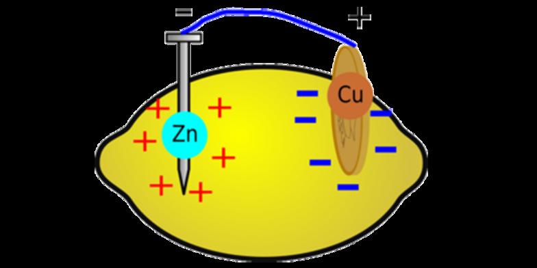 Group project fruit circuit. Fruits clipart diagram
