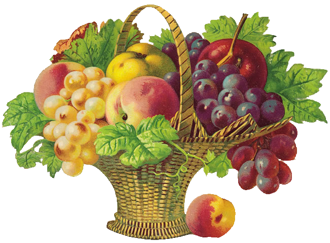 Fruits clipart fresh fruit. Basket of png d