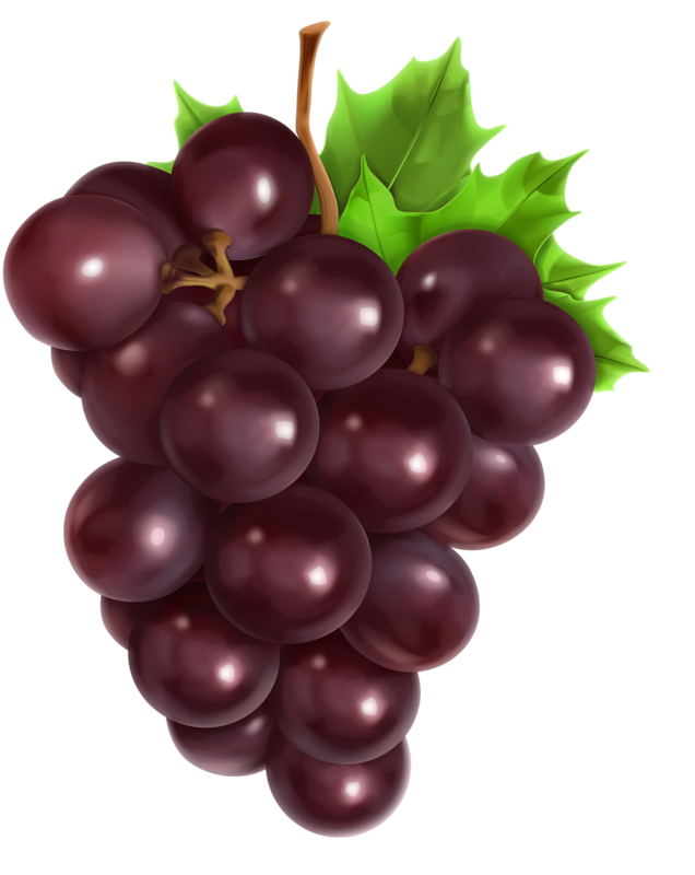 Grape clipart illustration. Fruits set of vector