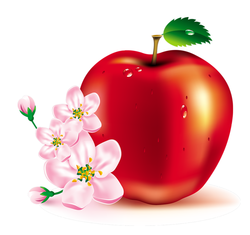 Fruits clipart spring.  b c fc