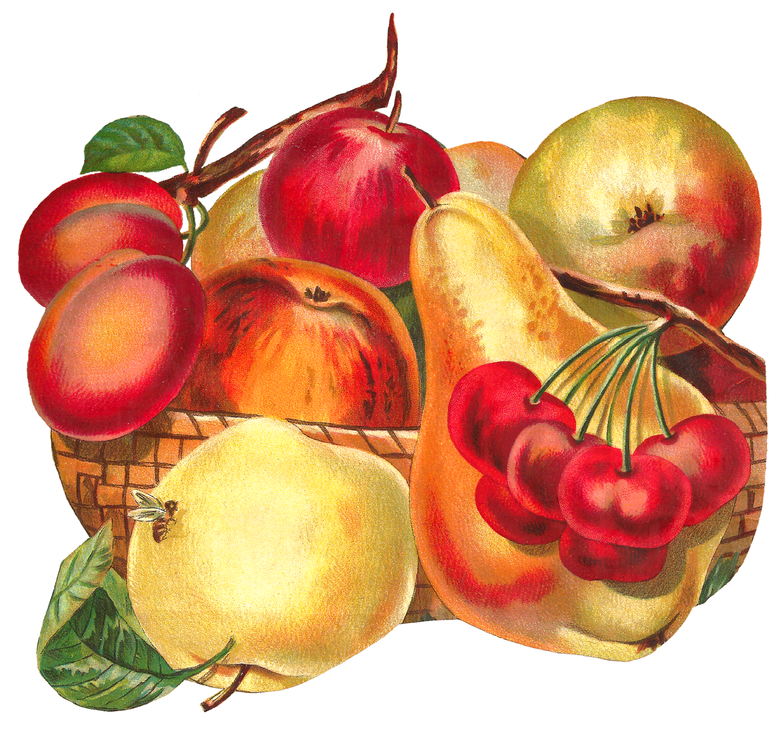 Pear clipart 3 fruit. Antique images basket botanical