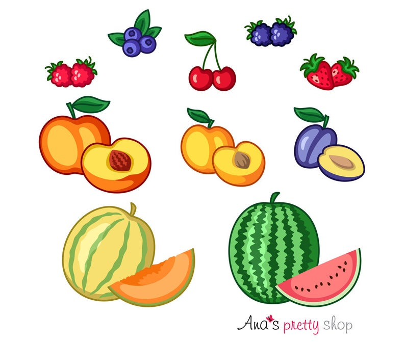 Fruits clipart vector. Illustration apricot blueberries cherries