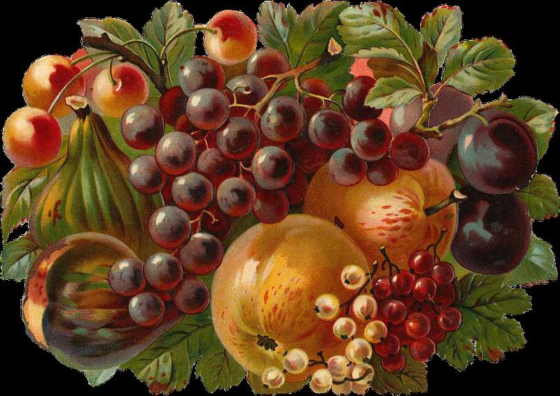 Fruits clipart victorian.  google decoupage pinterest