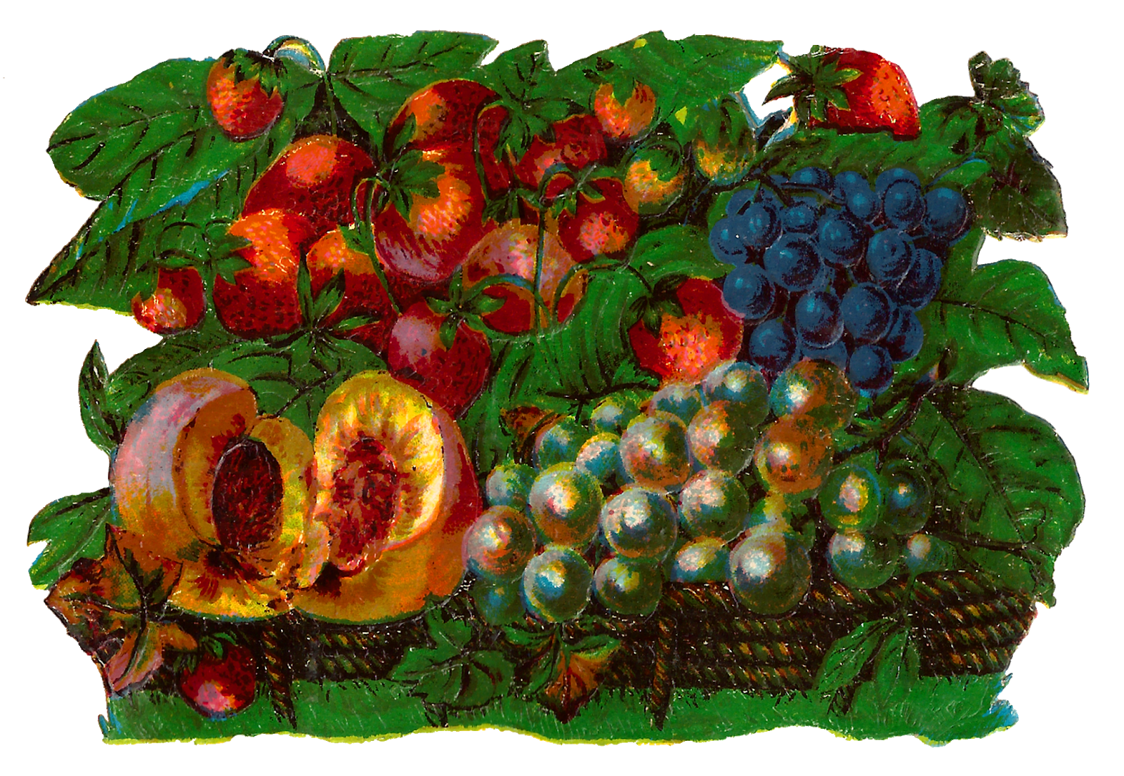 Fruits clipart victorian. Antique images vintage fruit