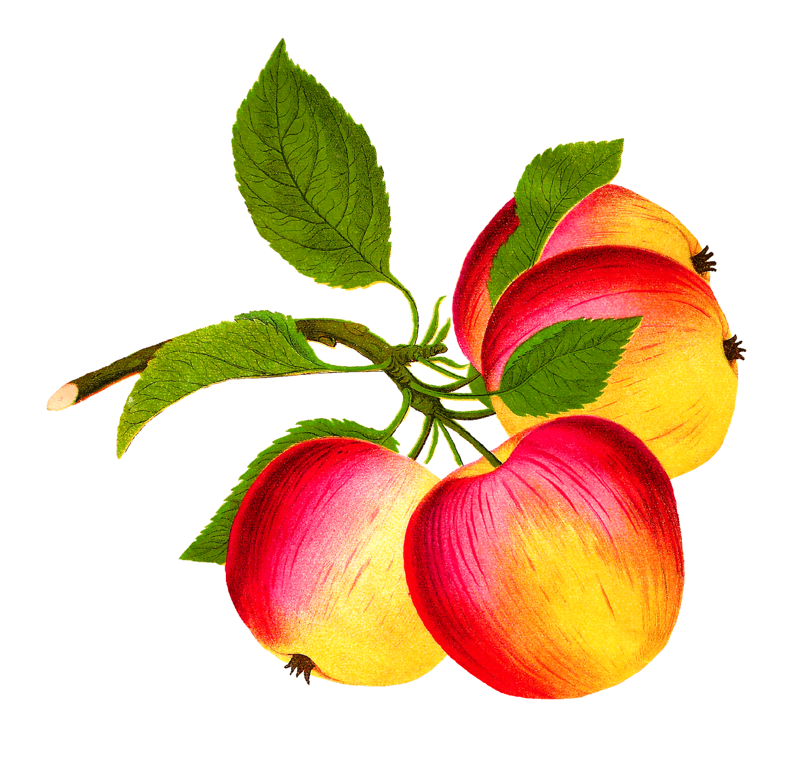 Fruits clipart victorian. Digital fruit download christmas
