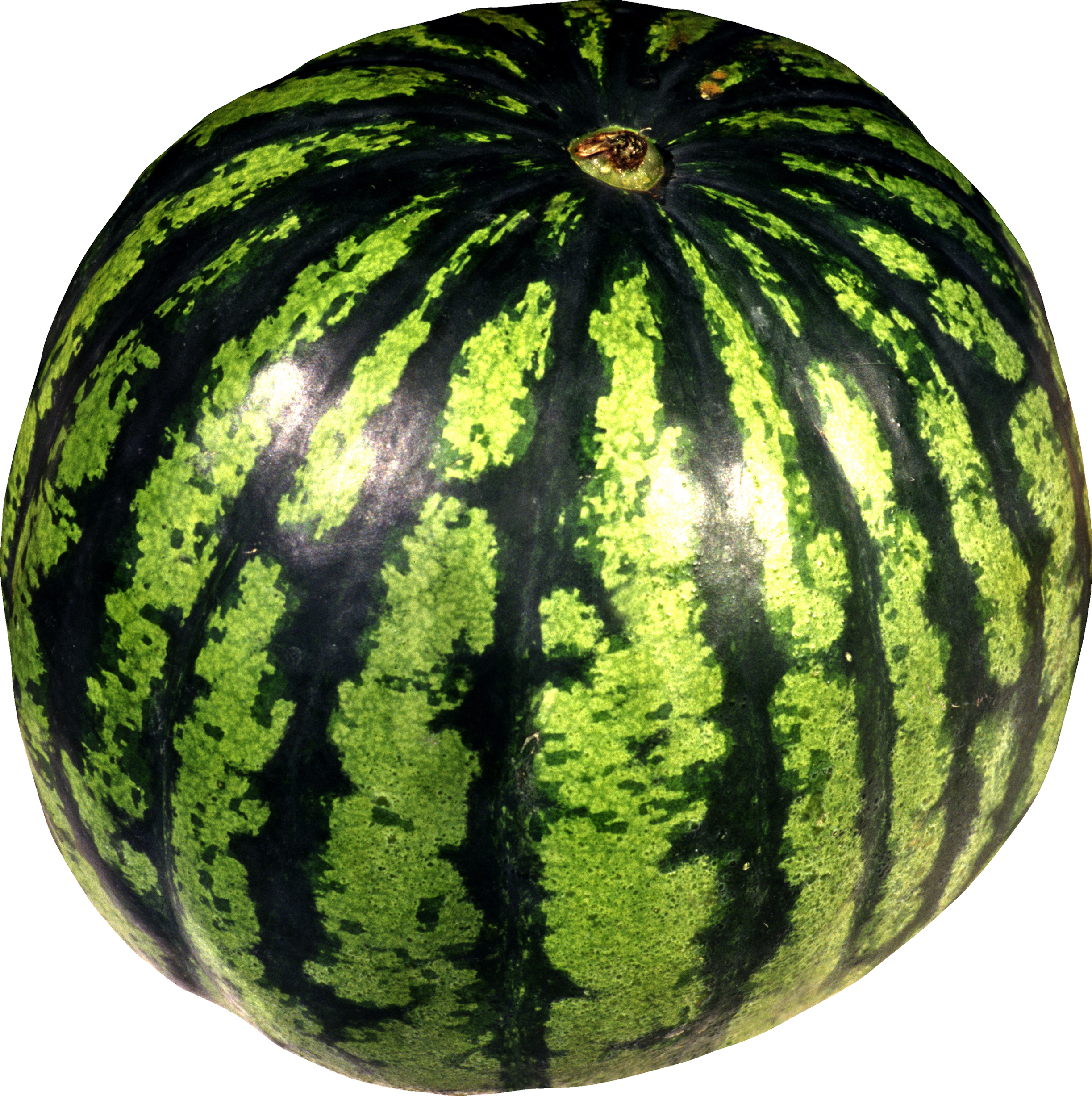 Watermelon clipart green fruit vegetable. Png images free download