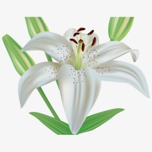 Funeral clipart easter. Lily flower clip art