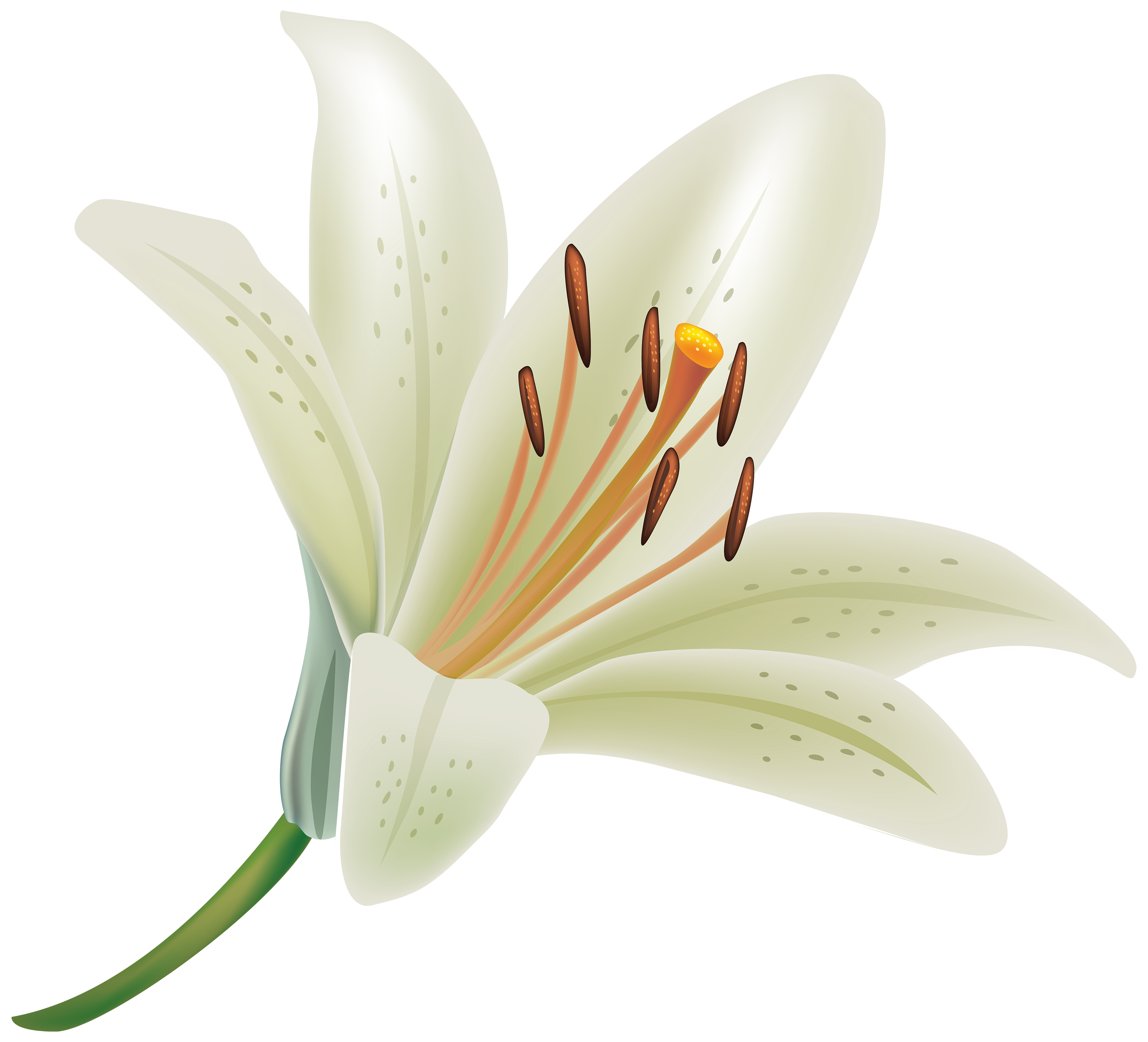 Lily flower png. Earth wallpapers desktop phone