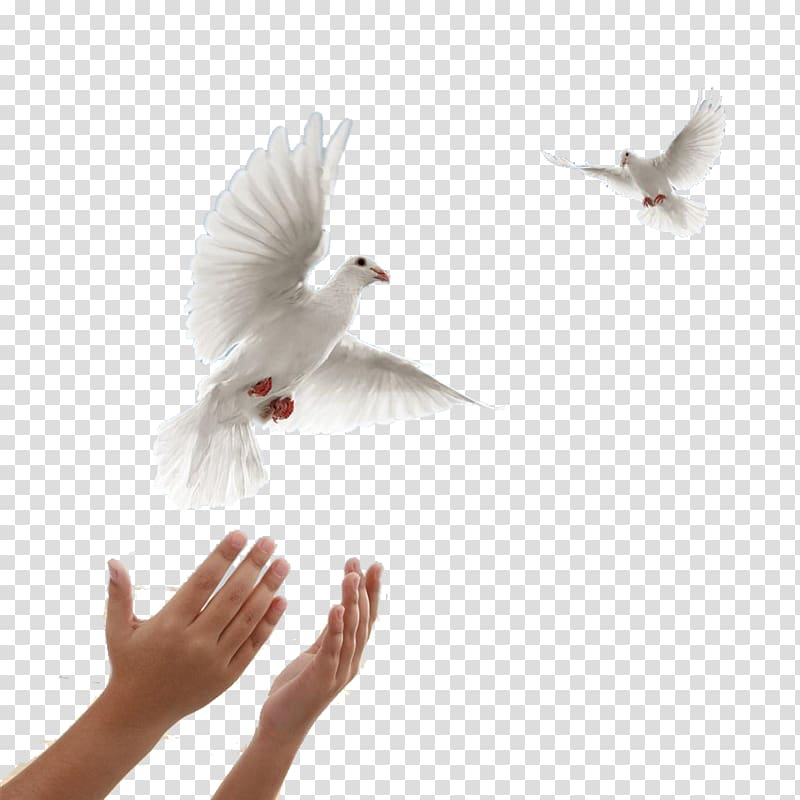Funeral clipart peaceful. Two white doves columbidae
