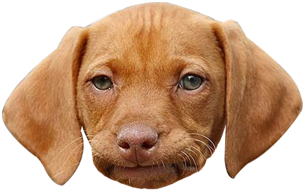 Dog face . Funny png images