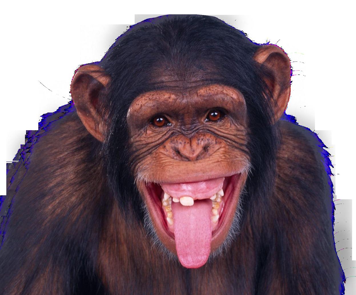 Pngpix monkey transparent image. Funny png images