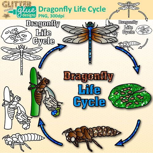 Dragonfly cycle clip art. Future clipart student life