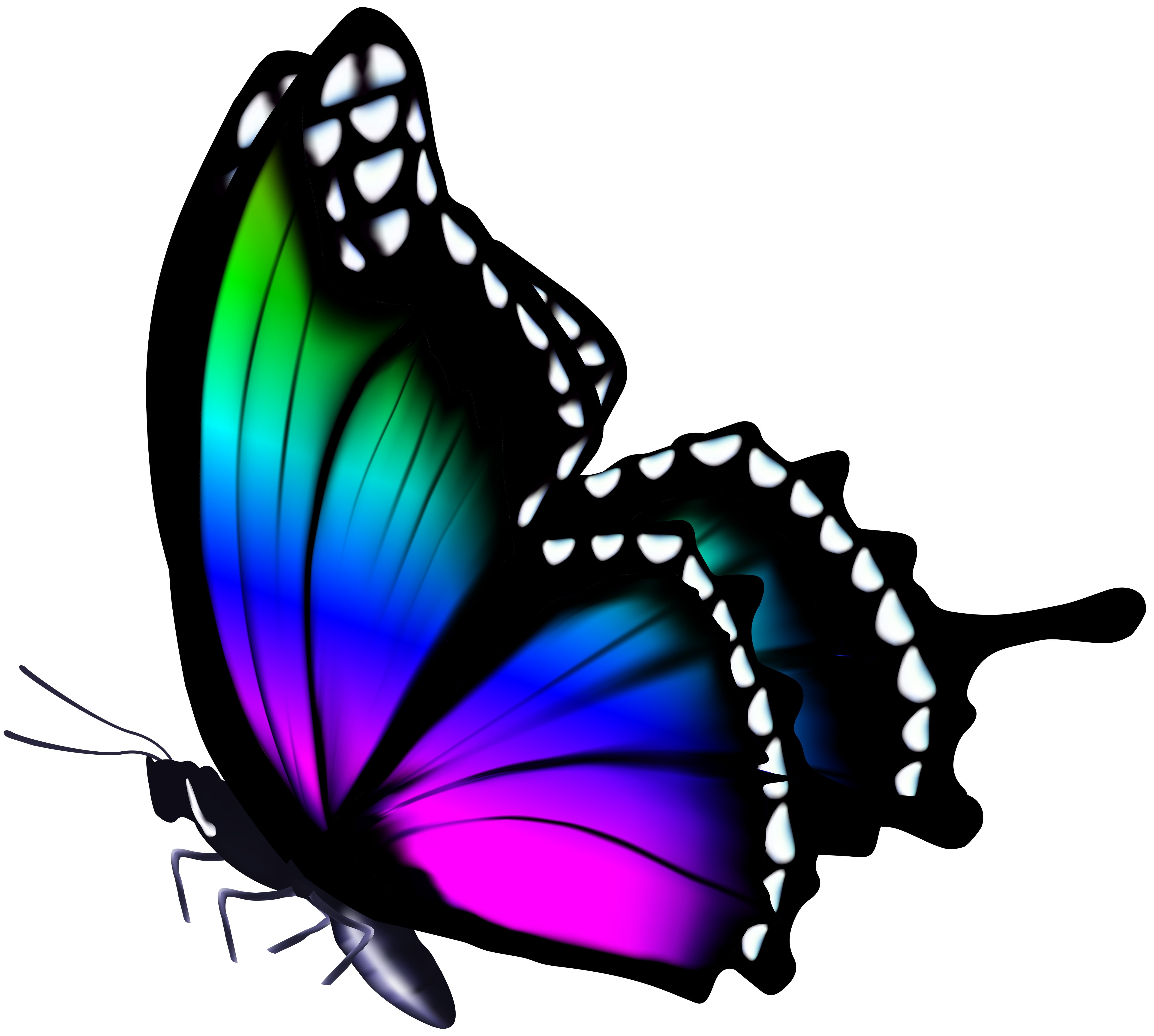 Vines clipart butterfly. Galaxy frames illustrations hd
