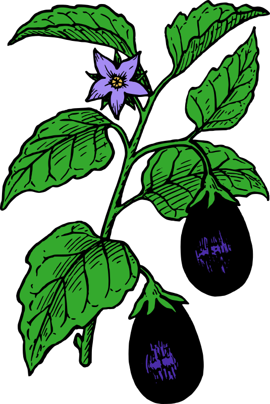 collection of plant. Garden clipart eggplant