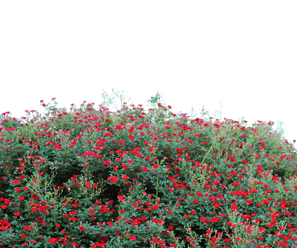 Free transparent png images. Flower garden use by