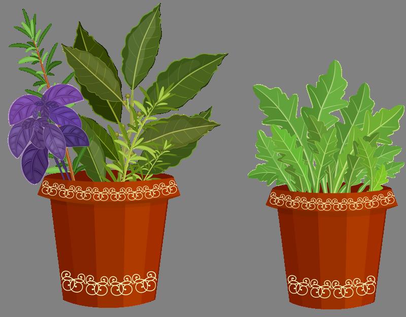 Garden clipart herb garden. Spices plants my valley