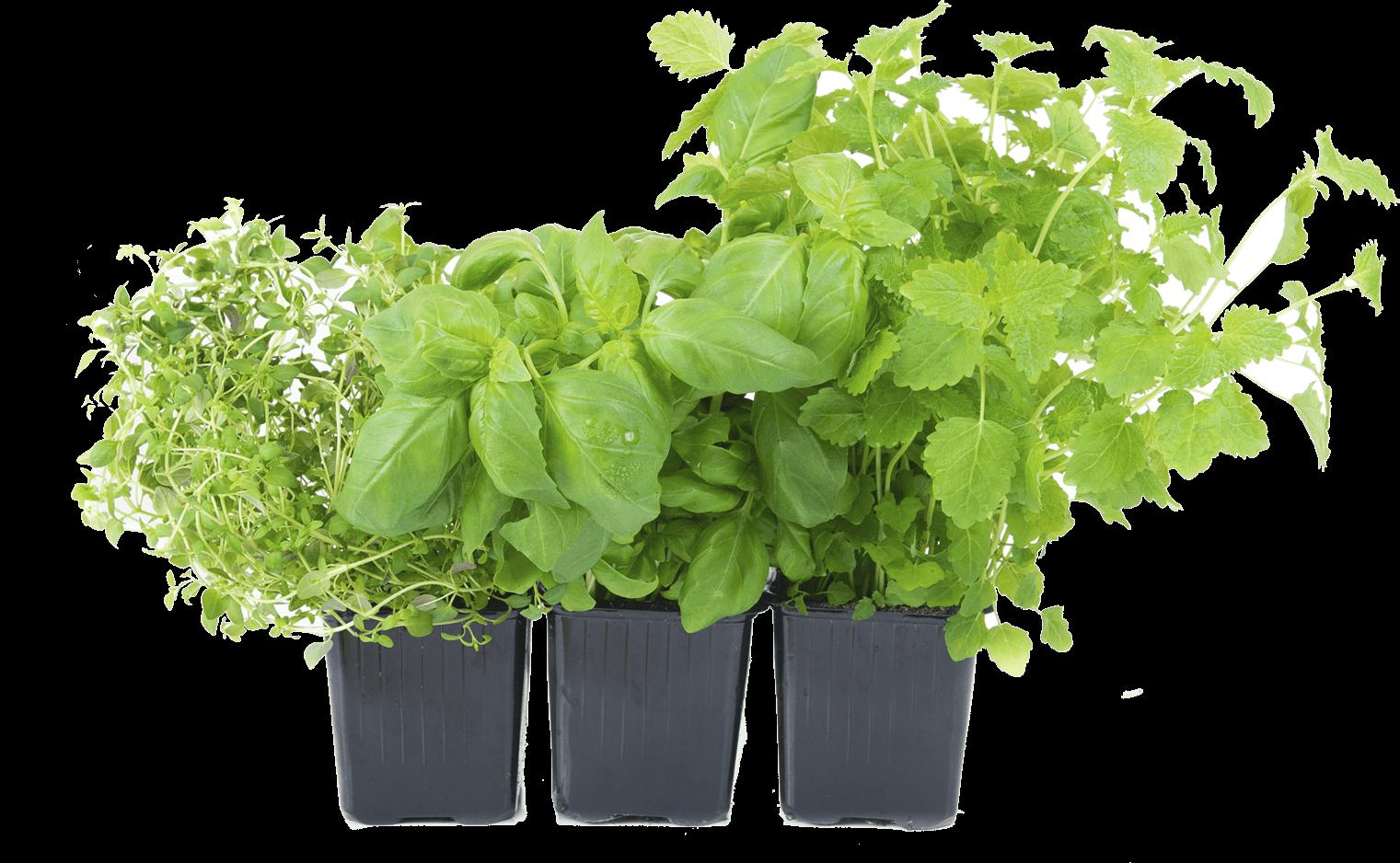 Garden clipart herb garden. Png transparent images all