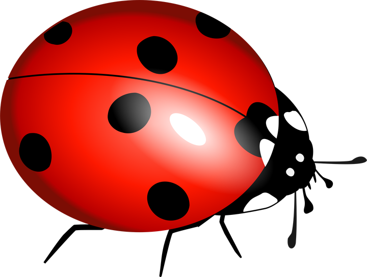 Gentle are actually cannibals. Ladybugs clipart red ladybug