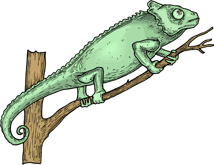 Free lizard in a. Gecko clipart reptile