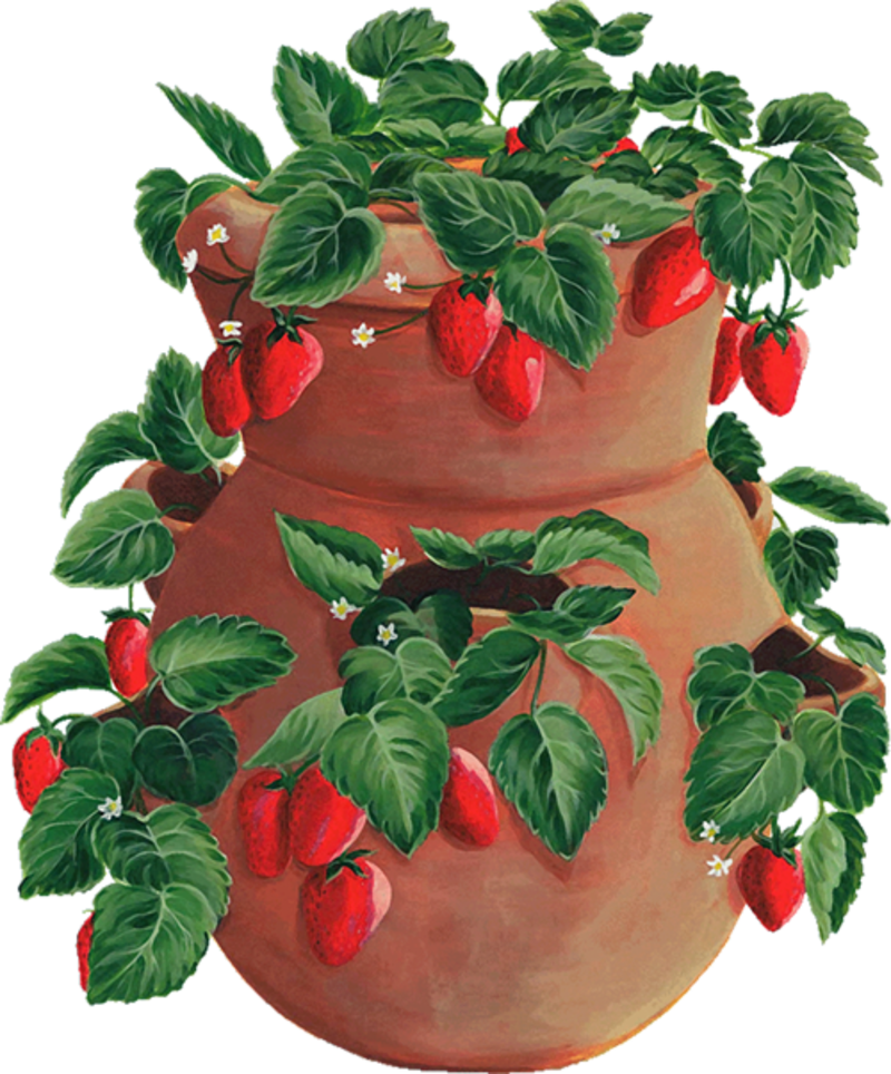 Laminas para decoupage clip. Strawberries clipart garden