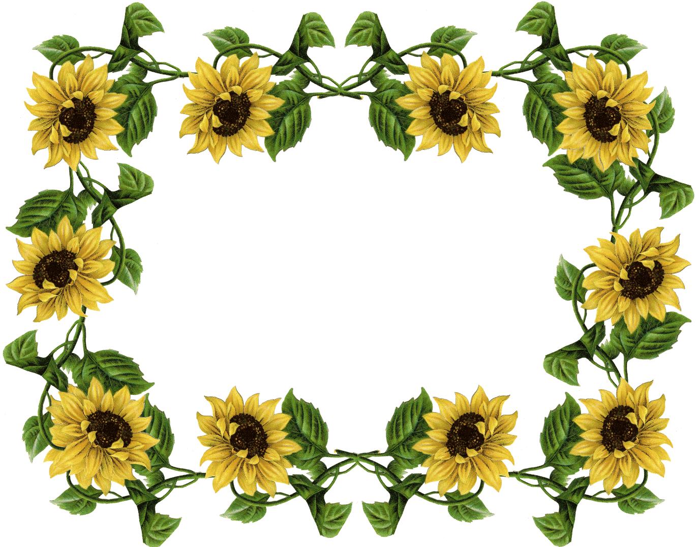Garden clipart sunflower. Border jokingart com download