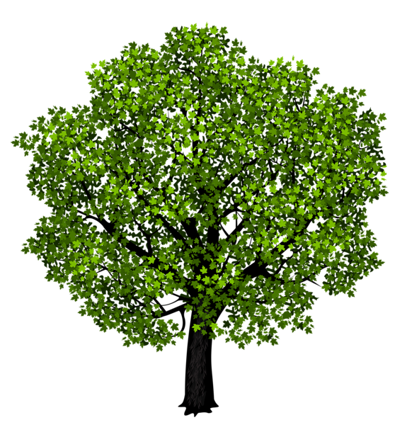 Marbles clipart four. Green maple tree png