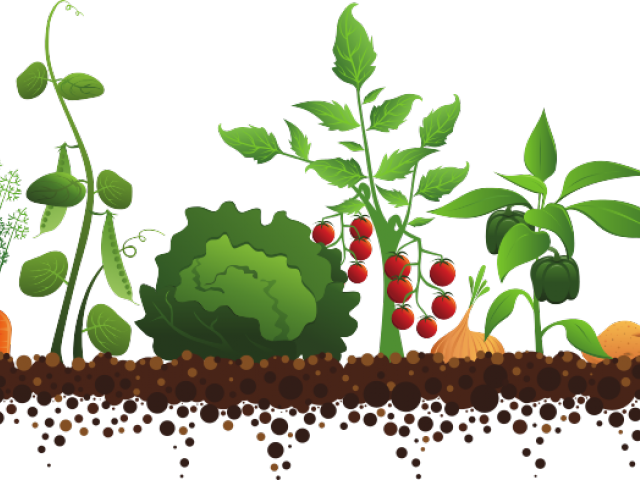 Garden clipart vegitable. Vegetable cliparts free download