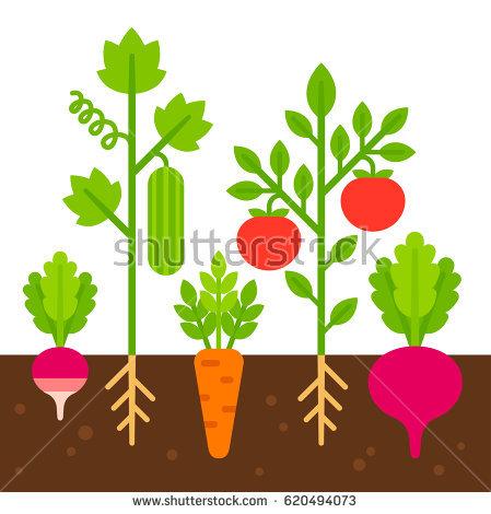 Vegetable free download best. Garden clipart vegitable