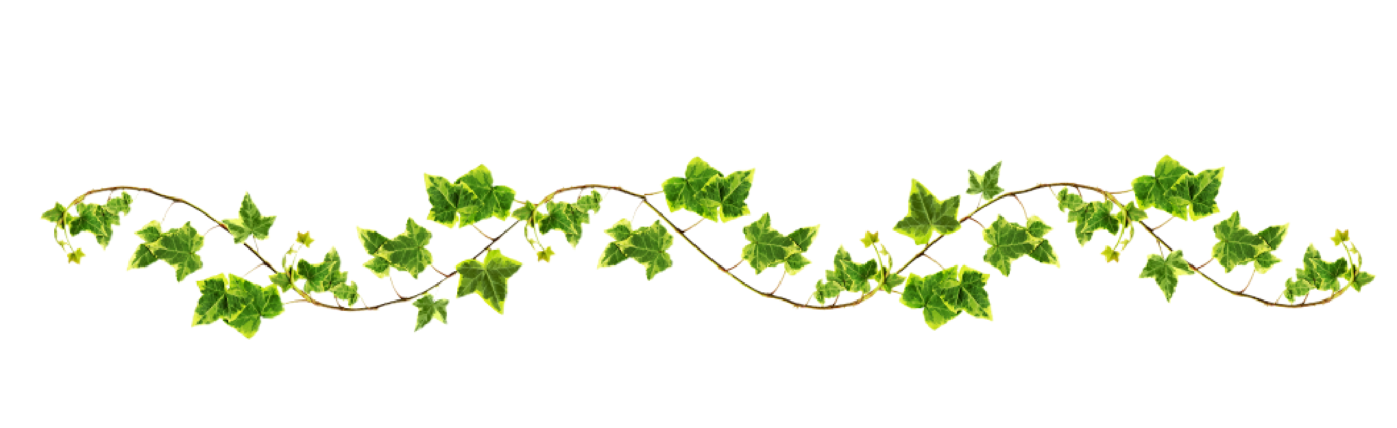 Vine with maple like. Vines clipart archway
