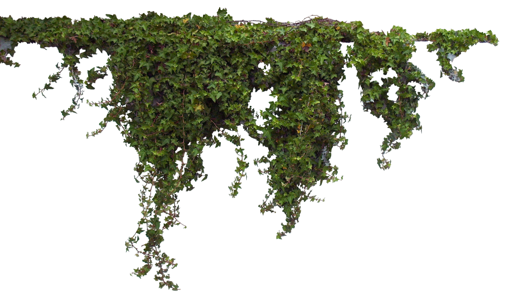 Flower plants png. Vines transparent pictures free