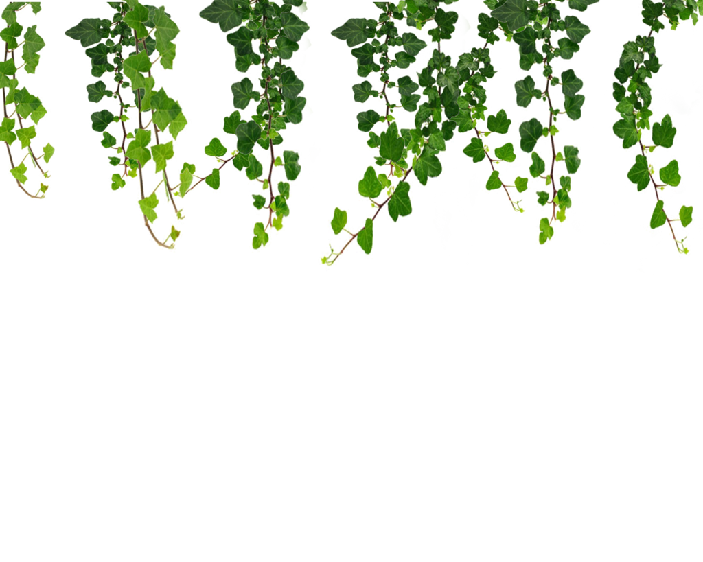 Garden clipart vine. Hanging vines png by