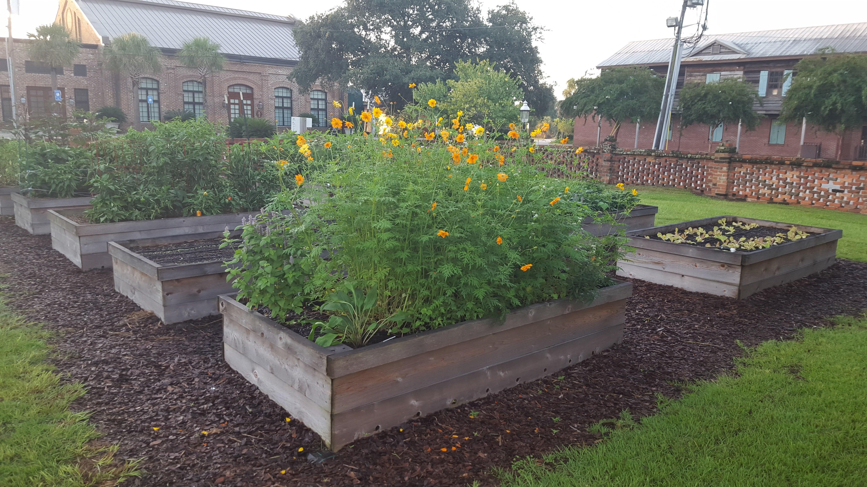 Community and school gardening. Gardener clipart backyard garden