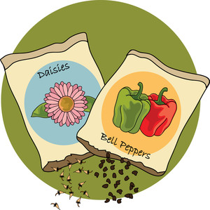 Illustration of daisy and. Gardening clipart bag seed