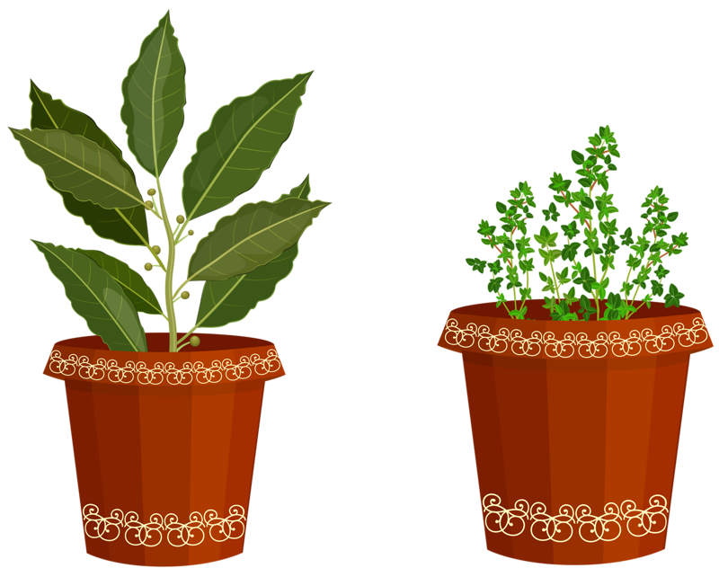 Plant clipart potted plant. Spices my garden valley