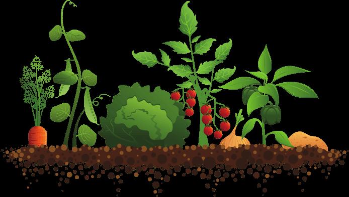 Food cliparts zone . Gardening clipart vegetable garden