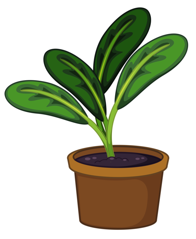 Plants clipart potted plant. Pin by andrea tan