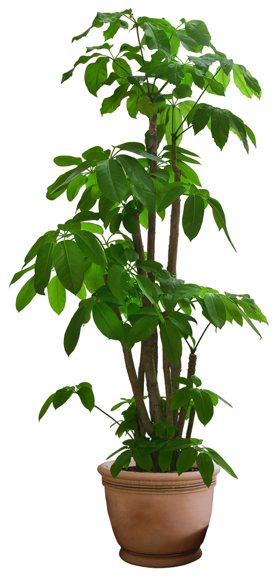 house plant png