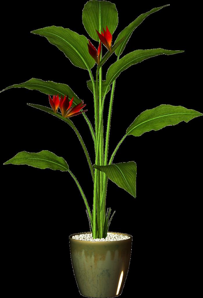 Pot plant png pinterest. Gate clipart dream garden