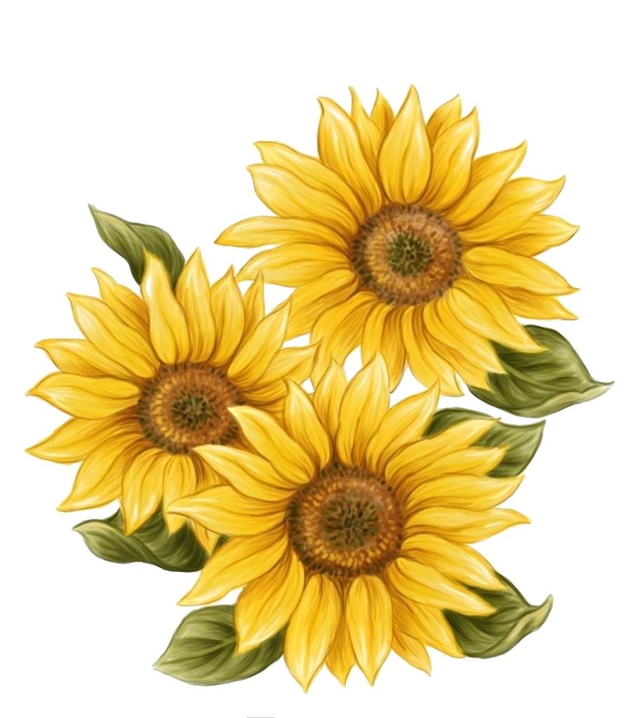 f e b. Gardening clipart tall sunflower