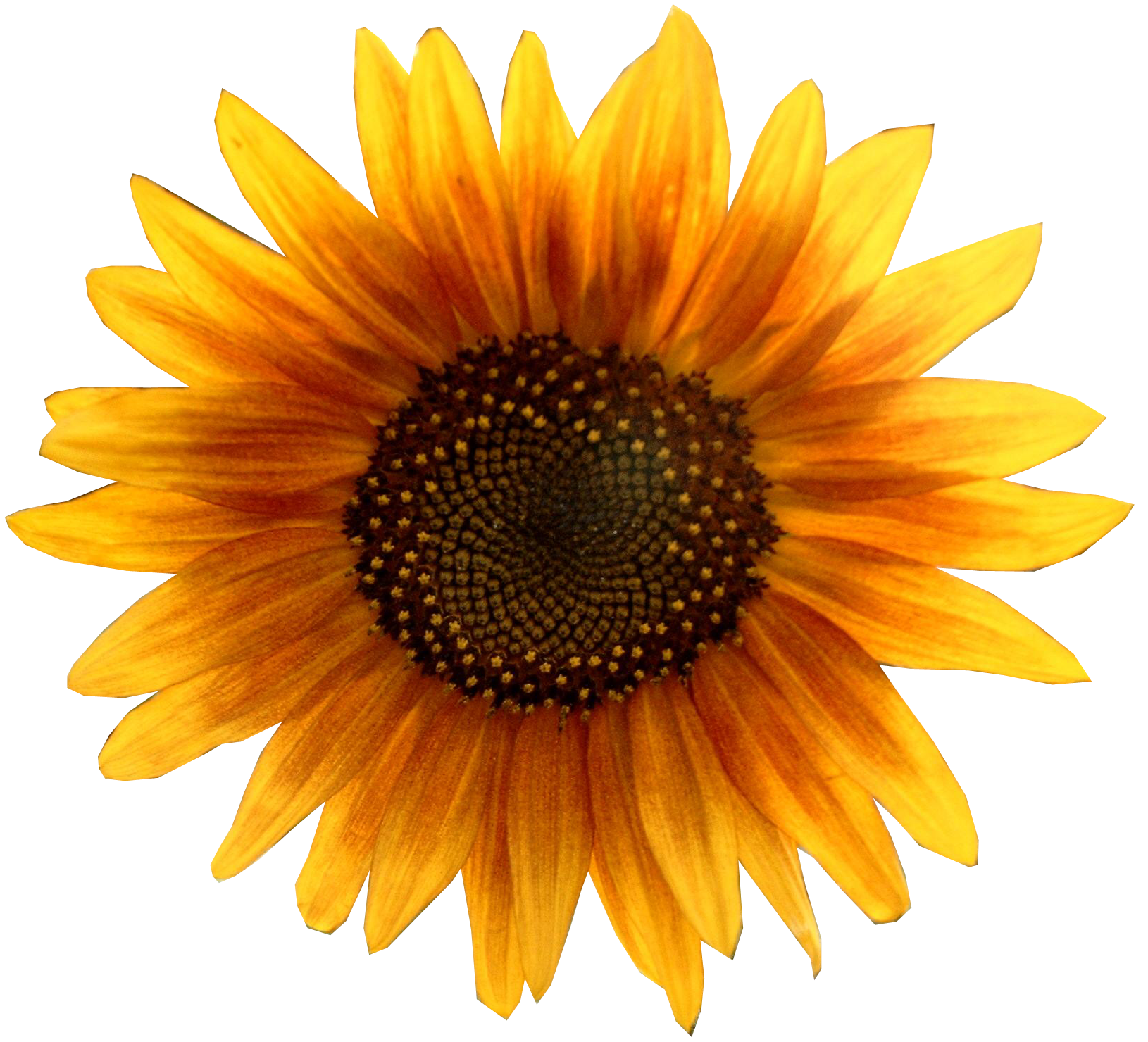 Harry l dr in. Gate clipart sunflower