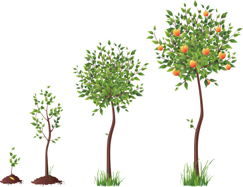 Tubes arbres arbustes feuillages. Gardening clipart tree plantation