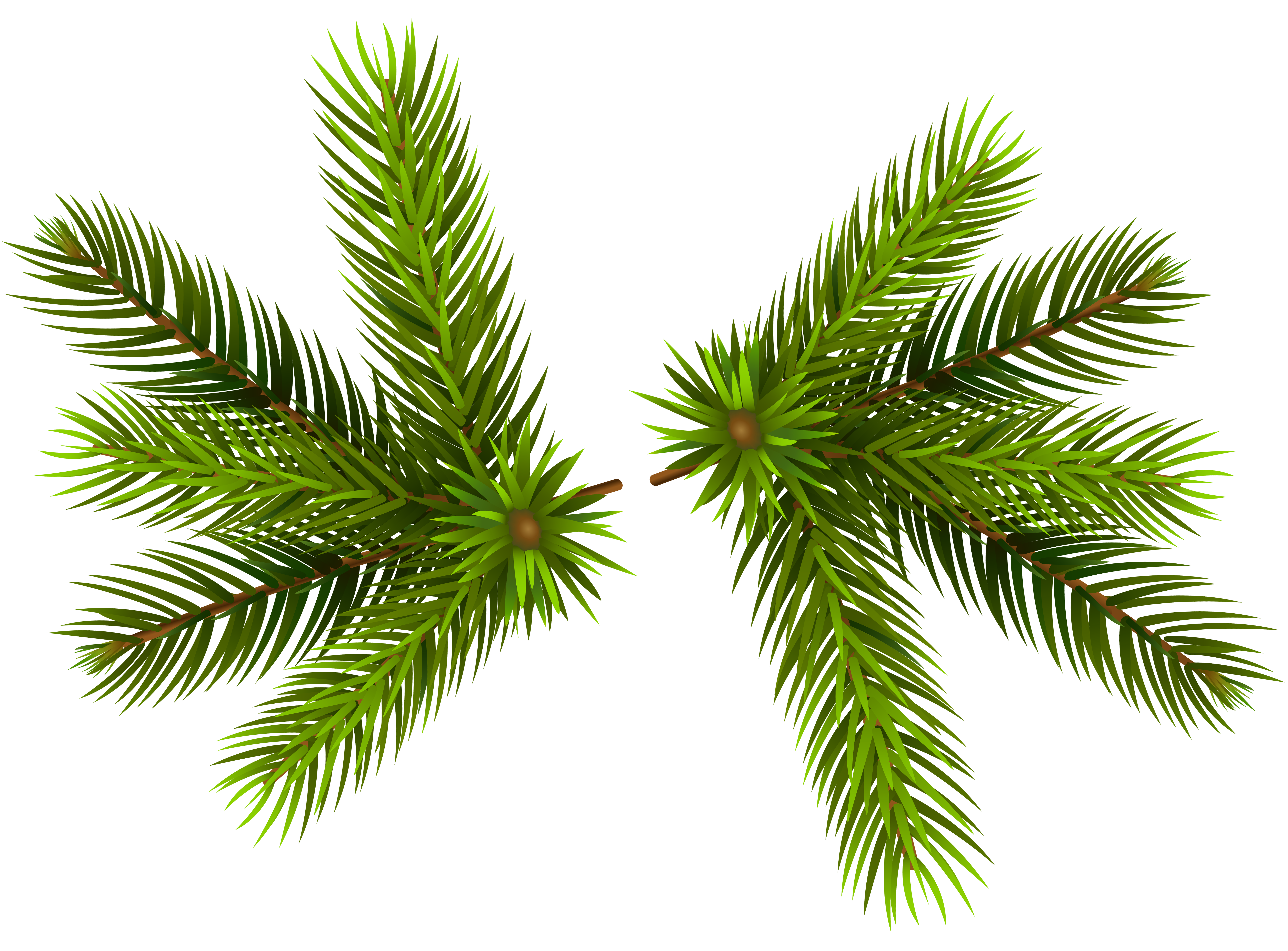 Pine free collection download. Garland clipart bough