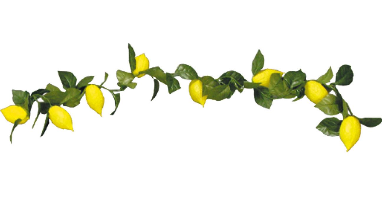 Esrog sukkah decoration . Garland clipart lemon