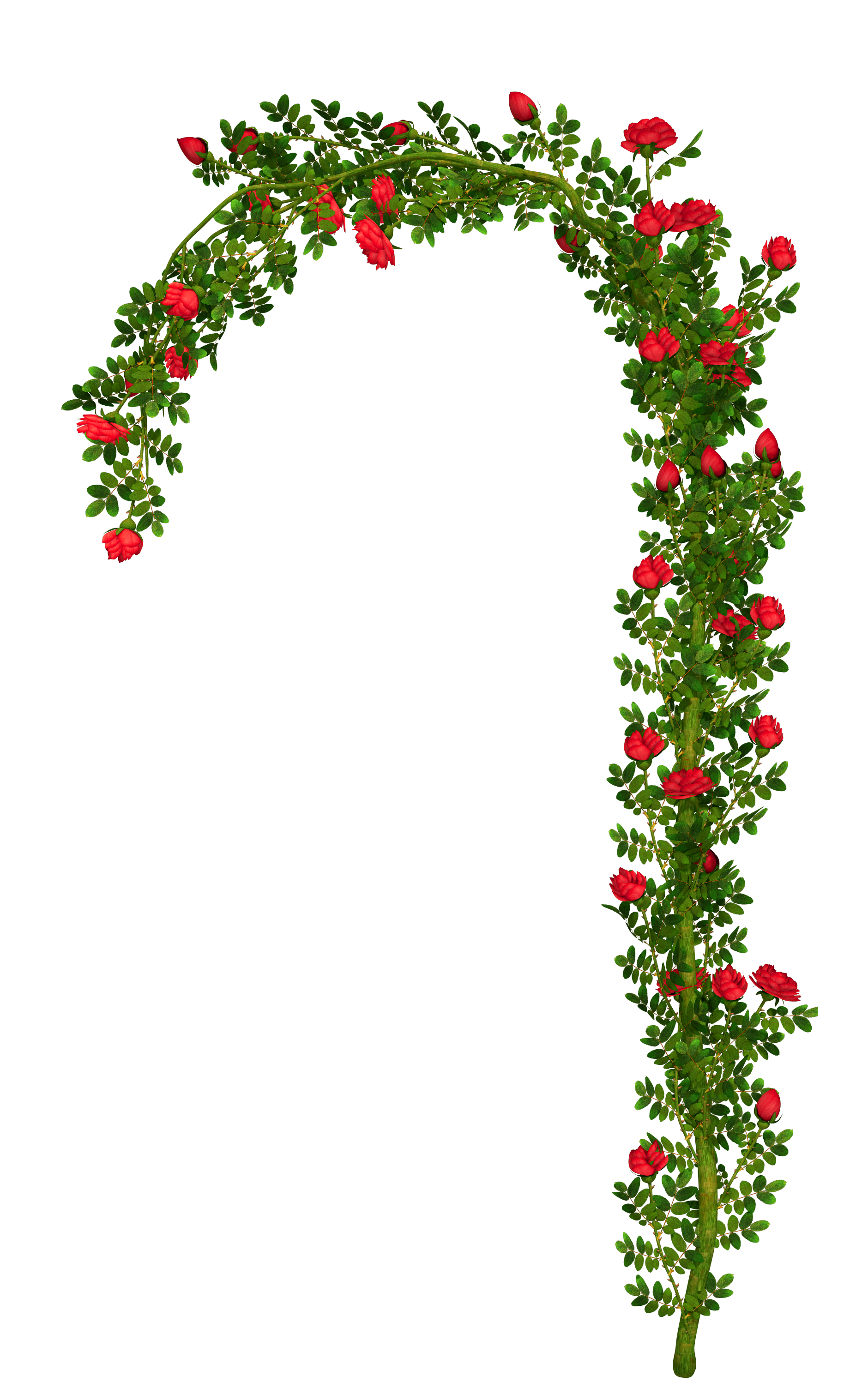 Arch flower free watercolor. Garland clipart library