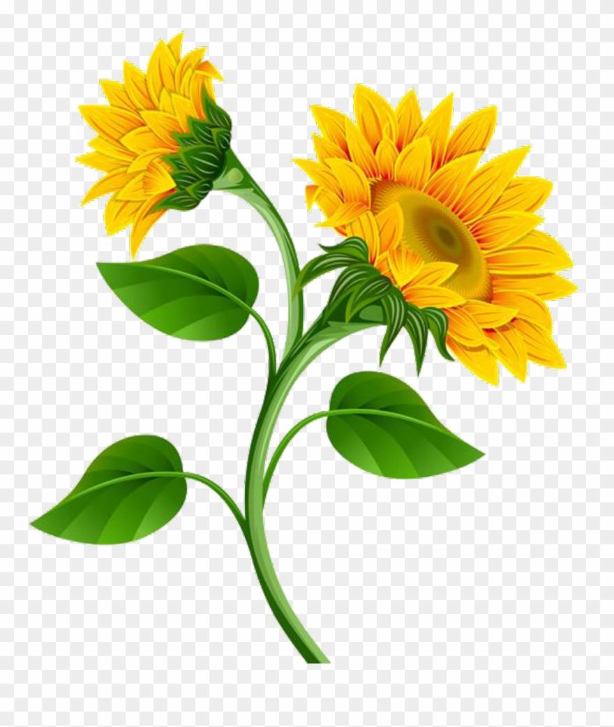 Sunflower flower clip art. Garland clipart marigold